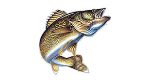 Minnesota Public Power Walleye Tournament